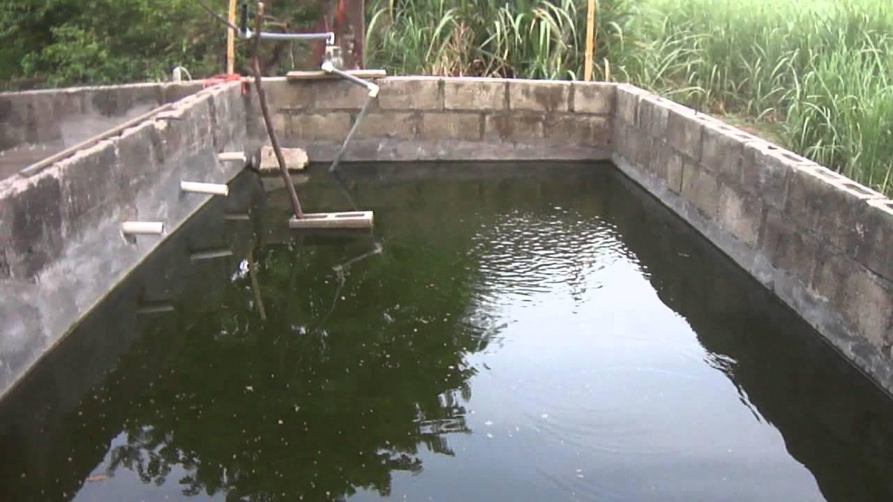 Cria y reproducci n de tilapia nilotica 2 youtube for Crianza de truchas en estanques