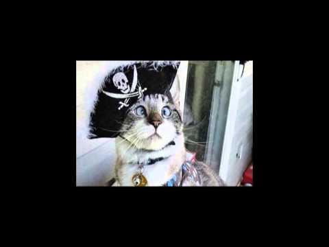 Nonnes Troppo - Le Chat