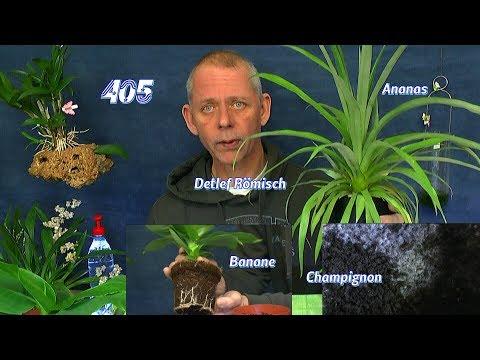 Champignon Myzel wächst, die Ananas im Haus und Auslosung der Osmose Anlage