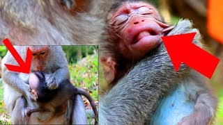 Why Mom Bite New Baby Monkey Like This?Luna Was Bitten By Mom|Luna New Baby Crying  So Loudly,SOK ST