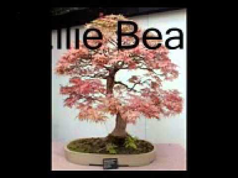 Beautiful Bonsai Tree Reviews: Nature In Tiny Bundles