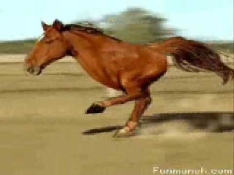 How to Give Your Horse the Right Supplements How to Give Your Horse the Right Supplements new pictures