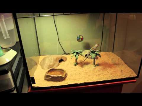 CRBE reptile expo pickups