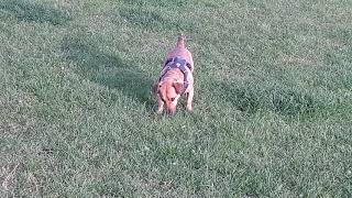 My Family Dog