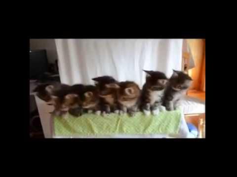 ネコ シンクロ