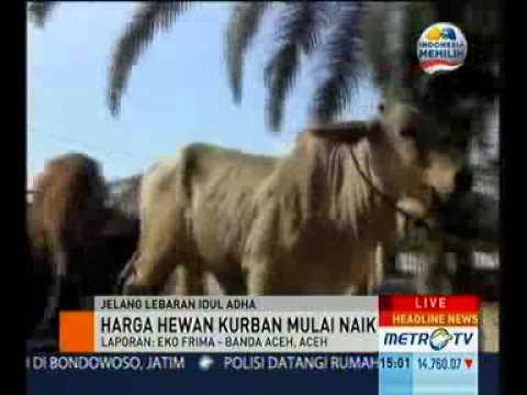 harga 2014 daftar harga kambing kurban 2012 jual sapi kambing kurban