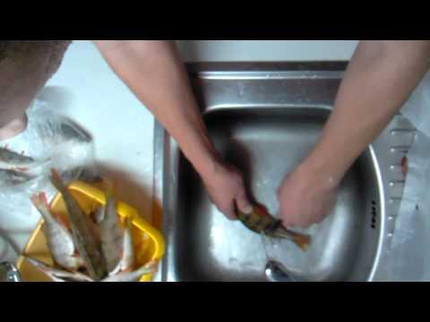 как почистить окуня в кипятке видео