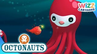 Octonauts   Stealing Flying Fish   Compilation   Wizz Cartoons