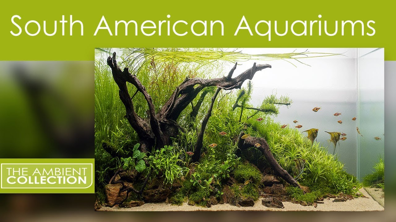 Aquarium Dvd South American Aquariums With Music And Nature Sounds Filmed In Hd Youtube