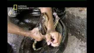 Documentario National Geographic - Serpenti Giganti