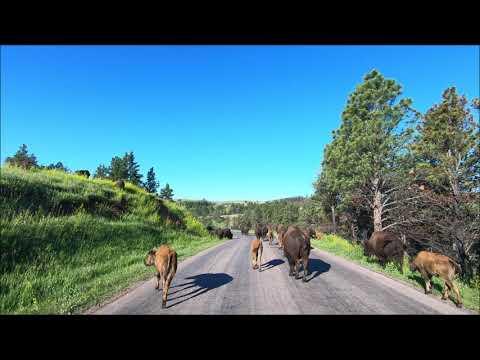 #4 Von den Badlands in die  Blackhills