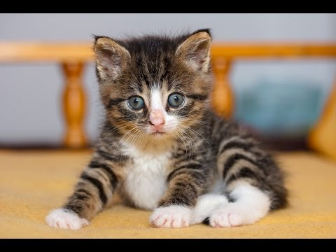 The Cutest Moments With Adopted Kitten Nikita