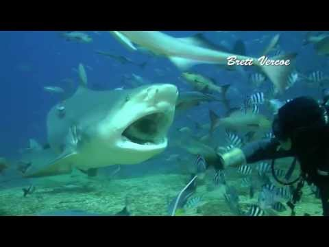 Fiji shark diving with Aqua-trek at Pacific Harbour.