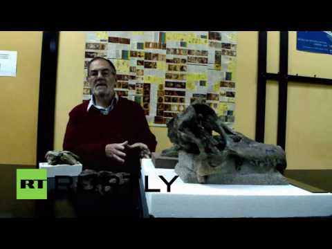 Argentina: This skull belonged to a newly discovered 10-ton dinosaur