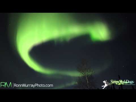 Musher's Cabin Northern Lights Photography Workshop Tour - Aurora at realtime speed in HD