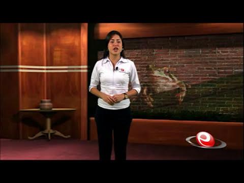 Videoaula | Anfíbios e Répteis: Classificação, Diversidade e Ecologia