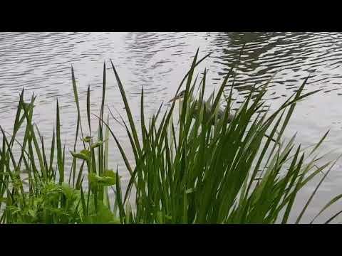Цапля тоже живёт на лебедином озере! Аnimals,Tiere