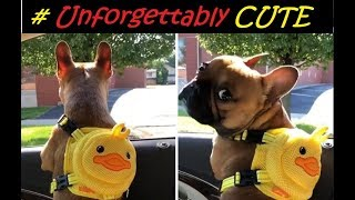 Unforgettably CUTE Dogs & Cats compilation 2018 # 001