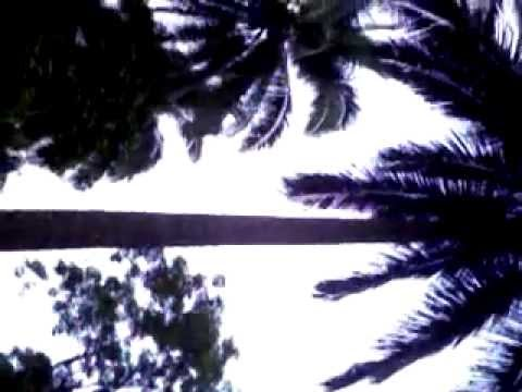 My nephew climbing up the coconut tree