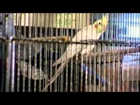 TRAILER La Jaula del Pájaro.mp4