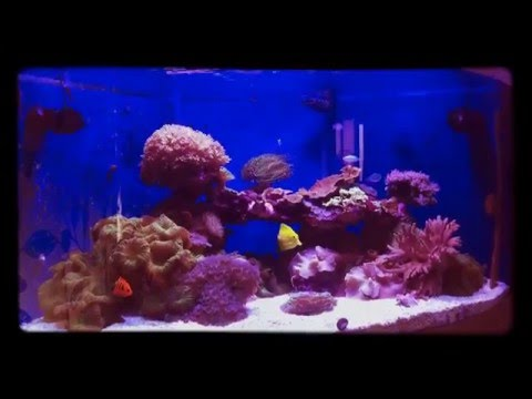 Juwel Trigon 350 Sumped Marine Aquarium Update # 3