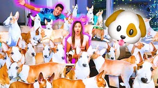 100 PUPPIES PRANK ON GIRLFRIEND!