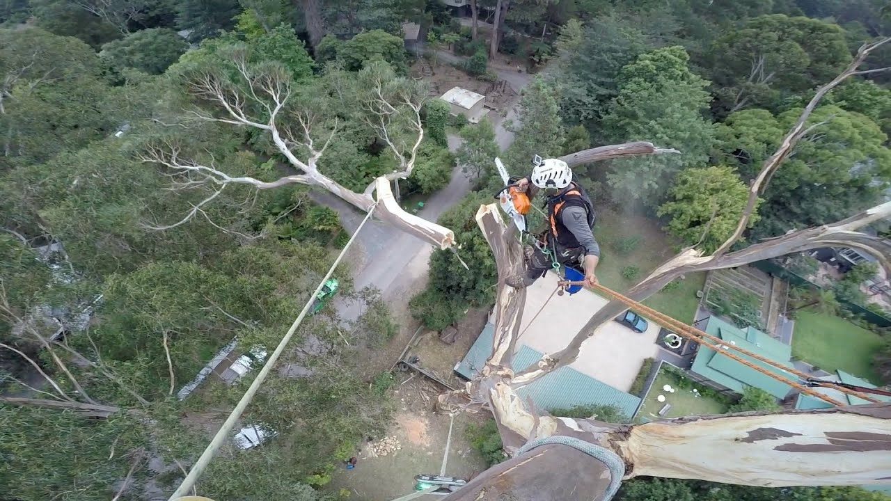 Awesome Footage Of Man Removing 130-Foot Tree