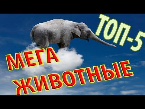 Самые Большие животные в МИРЕ (ТОП5) Самое Интересное