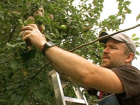 Portland's Backyard Fruit - From Waste to Feast