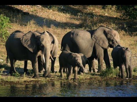 Chobe National Park: Botswana