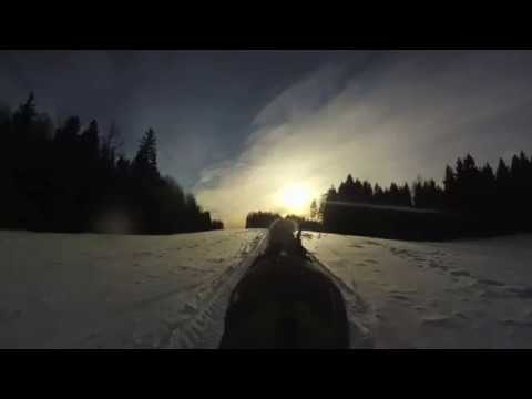sleigh ride fjord horse MP3