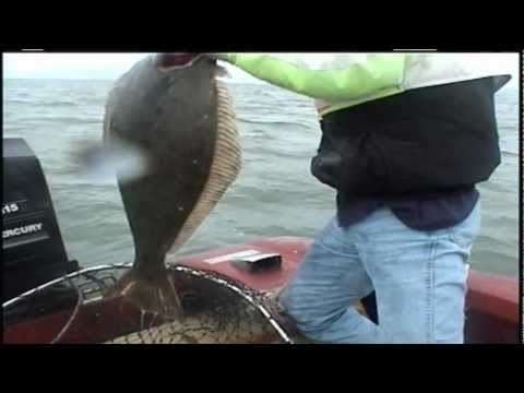 Halibut Fishing San Francisco Bay..mpg