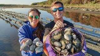 WHY Oysters are EXPENSIVE! Coastal Foraging (Oyster Farm Tour)-New England pt.1