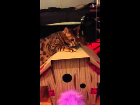 cat messing in house problem