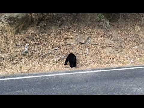 Кино о медведях