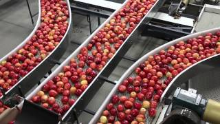 Touring an apple packing facility