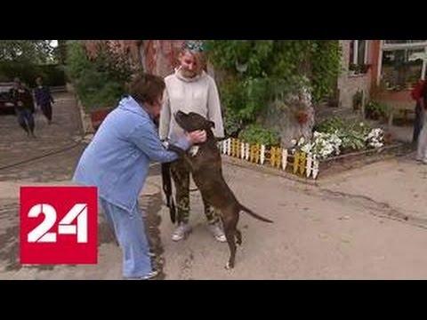 Москвичка обнаружила в купленной квартире брошенную собаку