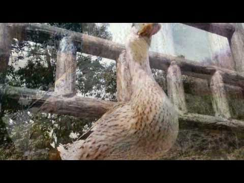 Goovie写眞館 WATER BIRD