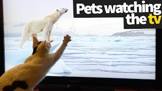 Pets Watching TV Compilation | Pets Being Hilarious