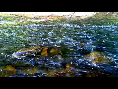 Нерестовая река горбуши