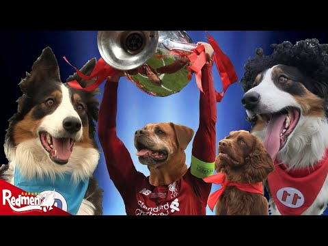 The Road to Madrid: Recreated by Dogs