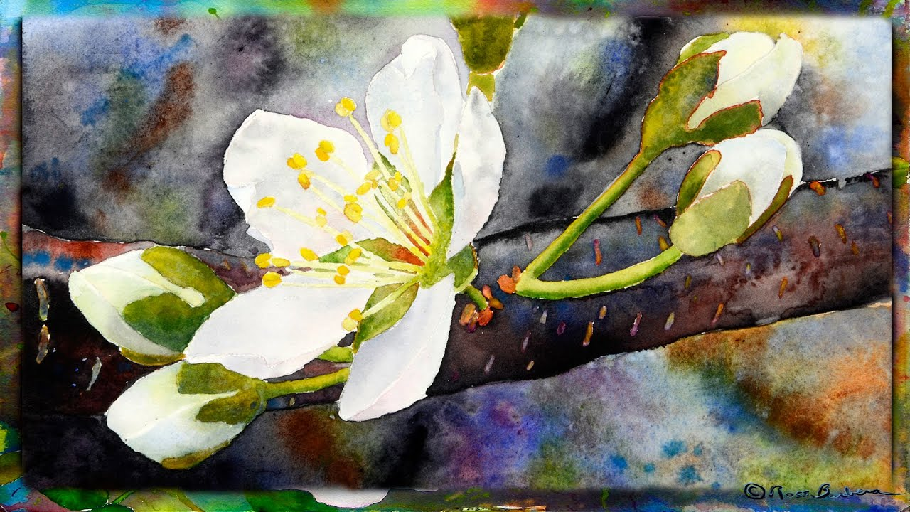 how to paint the cherry blossom in watercolor part 1