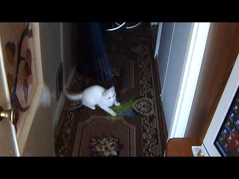 Кошка Марта (Ветер Воды - Свистопляска)