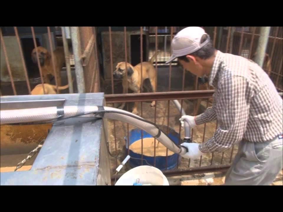 Koreans Eat Dog 1 a Korean Edible Dog