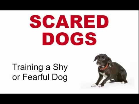 Scared Dogs: Training A Fearful Dog video