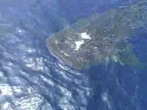 Swimming with a Whale Shark off Hula Kai Kona Video