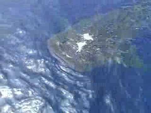 Swimming with a Whale Shark off Hula Kai Kona Video