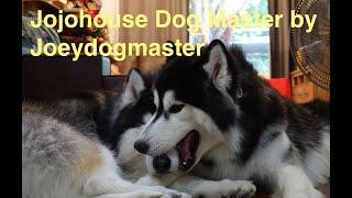 ศูนย์ฝึกสุนัขโจโจ้เฮ้าส์ ด๊อก มาสเตอร์ Jojohouse Dog Master