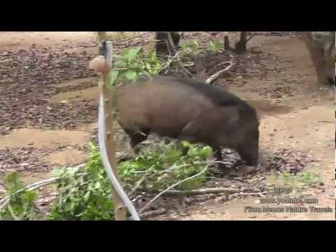 Nature and Trees Birds - Relax With Nature - Wild Boars