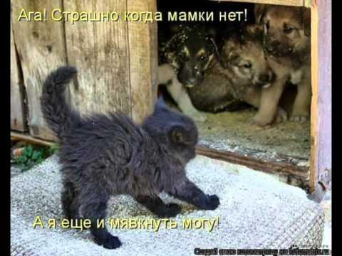 Кошки жгут!.mpg